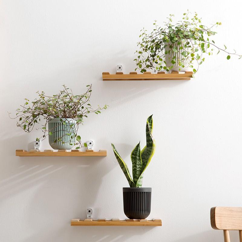 Librerie e mensole con piante per portare natura e freschezza sfruttando ogni angolo disponibile